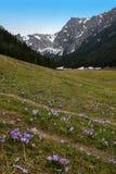 Croco su una radura della montagna immagini stock libere da diritti