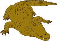 Crocodile. Vector - crocodile isolated on background Royalty Free Stock Images
