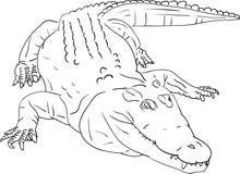 Crocodile. Vector - crocodile isolated on background Royalty Free Stock Image