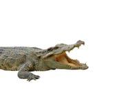 Crocodile. In chiang mai night safari Royalty Free Stock Photo