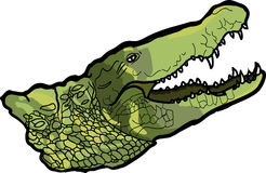 Crocodile. A big scary crocodile with opened mouth stock illustration
