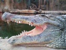 Crocodile. At the zoo Stock Photo