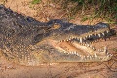 Crocodile or Aligator. Close up of a Crocodile or Alligator Stock Photography