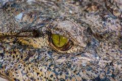 Crocodile or Aligator. Close up of the eye of a Crocodile or Alligator Royalty Free Stock Photos