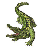 Crocodile or Alligator. Animal in ethnic style. Vector illustration Stock Photography