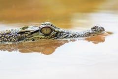 Crocodile, animals, macro, bokeh, insect, mammals, nature, stock images