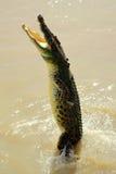 Crocodile Australie II d'eau de mer Photographie stock libre de droits