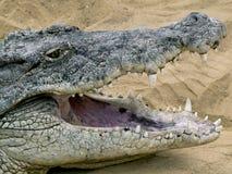 Crocodile avec la bouche ouverte Images stock