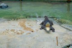 Crocodile avec la bouche ouverte Photographie stock