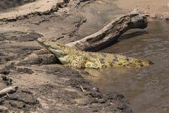 Crocodile on bank Royalty Free Stock Photo