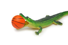 Crocodile with basketball. Isolated on white royalty free stock images