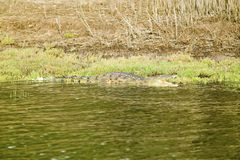 Crocodile bathing in sun at  Greater St. Lucia Wetland Park World Heritage Site, St. Lucia, South Africa Stock Photo