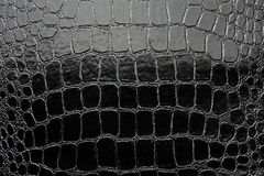 Crocodile leather black glossy artificial texture Stock Photos