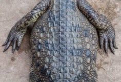 Crocodile. Stock Photography
