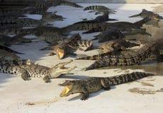 Crocodile bouche bée Tiré dans la ferme et le zoo de crocodile de Samut Prakan Image stock