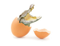 Crocodile in broken eggshell isolated Royalty Free Stock Images