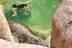 Crocodile cage diving Royalty Free Stock Photos