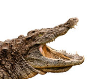 Crocodile clipping path included Stock Images