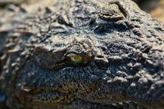 Crocodile close-up Royalty Free Stock Image