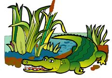 Crocodile  coloring book. Picture is from a set of coloring books, illustrations for  children. Kids  may painted, paint,sket. artistic design, vektor Royalty Free Stock Image