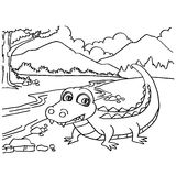 Crocodile coloring pages vector Stock Photos