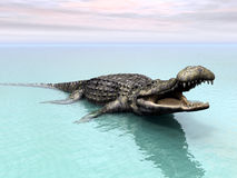 Crocodile Stock Photography