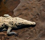 Crocodile. Site in Costa Rica, Central America Stock Photo