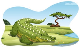 Crocodile. Cruel crocodile relaxing by the river bank Stock Image