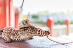 Crocodile cubain - marais de Zapata Photos stock