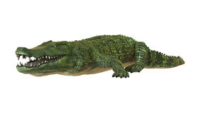 Crocodile. 3D digital render of a green crocodile isolated on white background Stock Photos