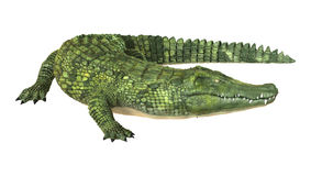 Crocodile. 3D digital render of a green crocodile isolated on white background Royalty Free Stock Images