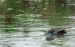 Crocodile d'eau de mer dans l'étang Photo stock