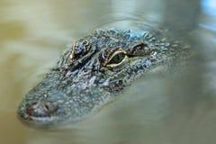Crocodile dans l'eau Photographie stock