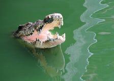Crocodile dans l'eau Images stock