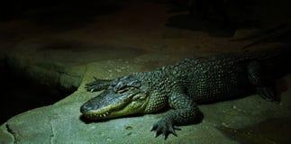 Crocodile display in zoo stock photo