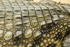 Crocodile. Done in macro and fast shot Stock Photos