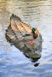 Crocodile ducky Stock Images