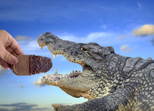 Crocodile eating ice cream Stock Photo