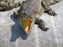 Crocodile effrayant Photos stock
