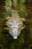 Crocodile en parc national du Kenya, Afrique photo stock