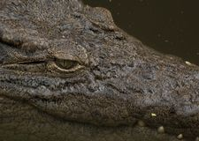 Crocodile Eye Royalty Free Stock Photos