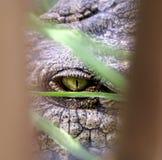 Crocodile eye. Nile crocodile eye peering through blurred vegetation Stock Photo