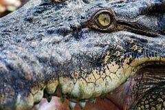 Crocodile eye Royalty Free Stock Photos