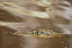Crocodile eye close up, Botswana Stock Photo
