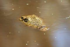 Crocodile eye close up, Botswana Stock Photography
