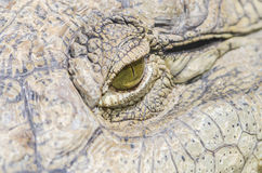Crocodile Eye Stock Photo