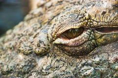 Crocodile eye Stock Image