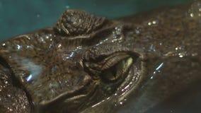 Crocodile Eyes stock footage