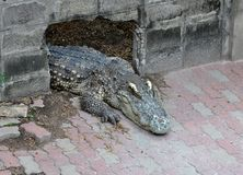 Crocodile Farm Stock Photography