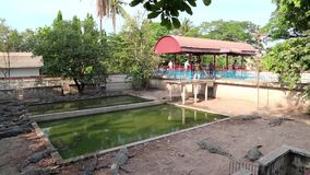 Crocodile farm in Cambodia stock video